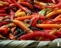 "Stewardship of culinary traditions; The literary kitchen of ""Like water for chocolate""; Chilies in Mexican food. Ep.03"